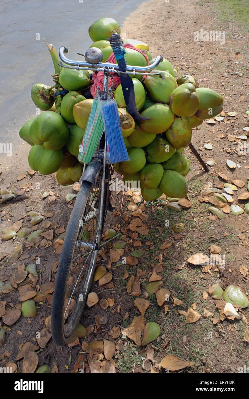 Coconuts on cycle ; Karnataka ; India - Stock Image