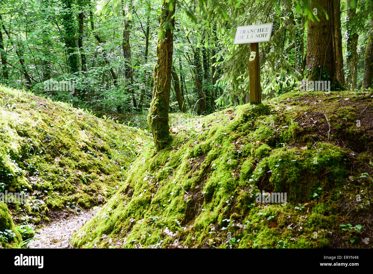 German First World War trench called 'Trench of Thirst' by the French, St Mihiel salient, Lorraine, France - Stock Image