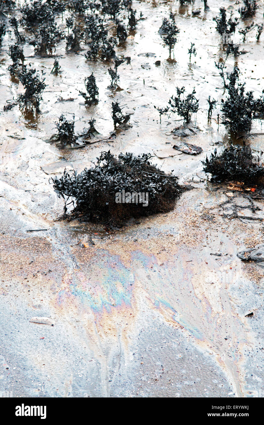 Mangroves affected by oil spill at elephanta island ; Bombay Mumbai ; Maharashtra ; India - Stock Image