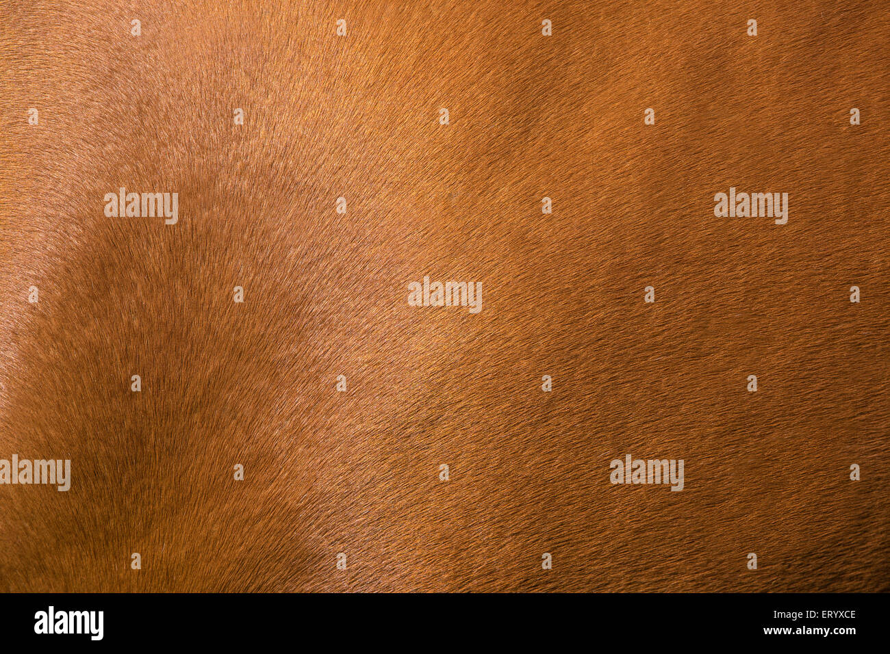 Close up horse skin concept for background Stock Photo
