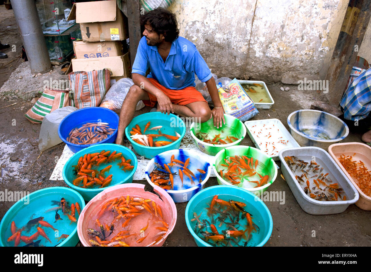 Fish Market Aqua Fish Seller Displaying Stock Of Aquarium Fishes