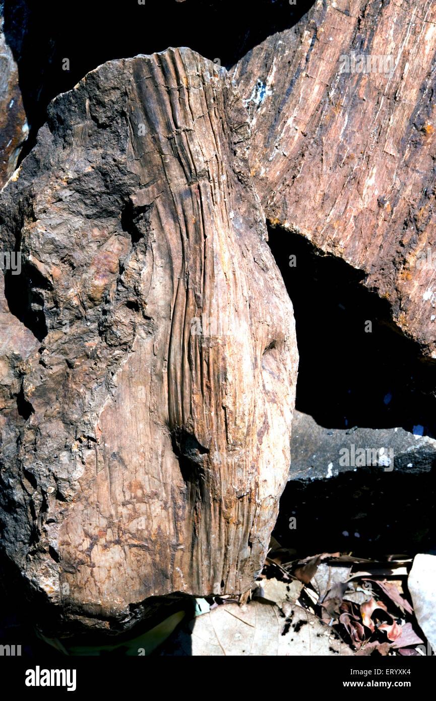 Fossil of Palm tree stem ; national fossil park ; Ghughwa ; Madhya Pradesh ; India - Stock Image