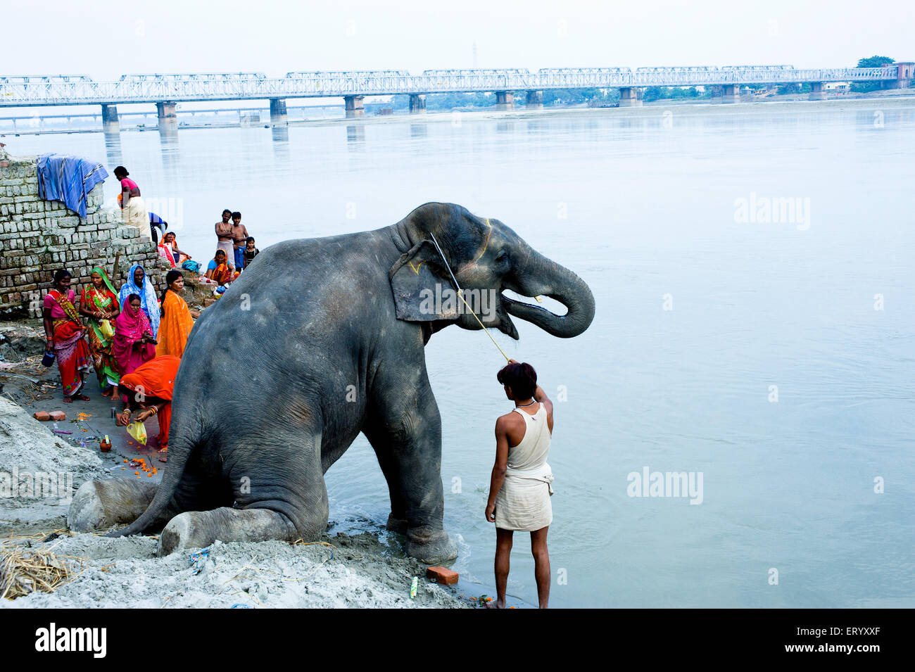 Elephant with owner at river sone ; Bihar ; India Stock Photo