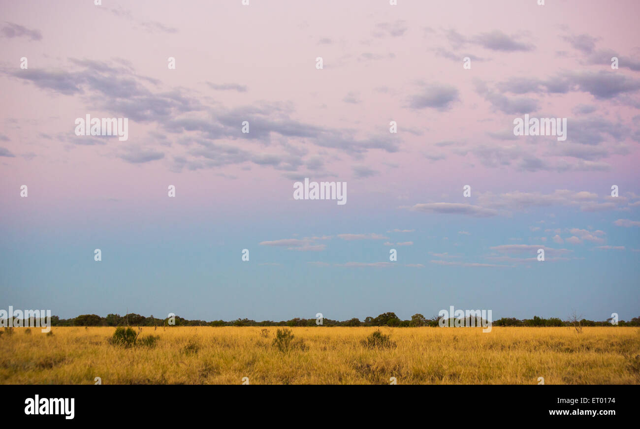 Open grassy plains at dusk in the Australian Outback, near Longreach, Queensland. - Stock Image