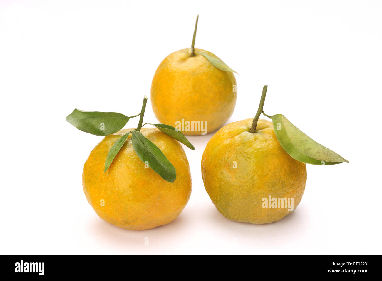Three Oranges with green leaves Citrus reticulate - Stock Image