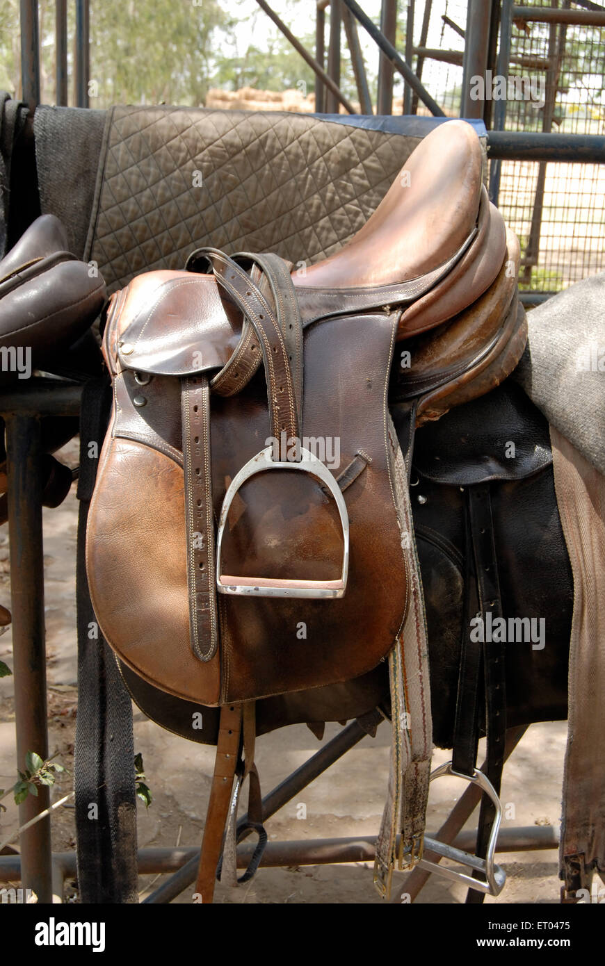 Horse riding gear 2008 - Stock Image