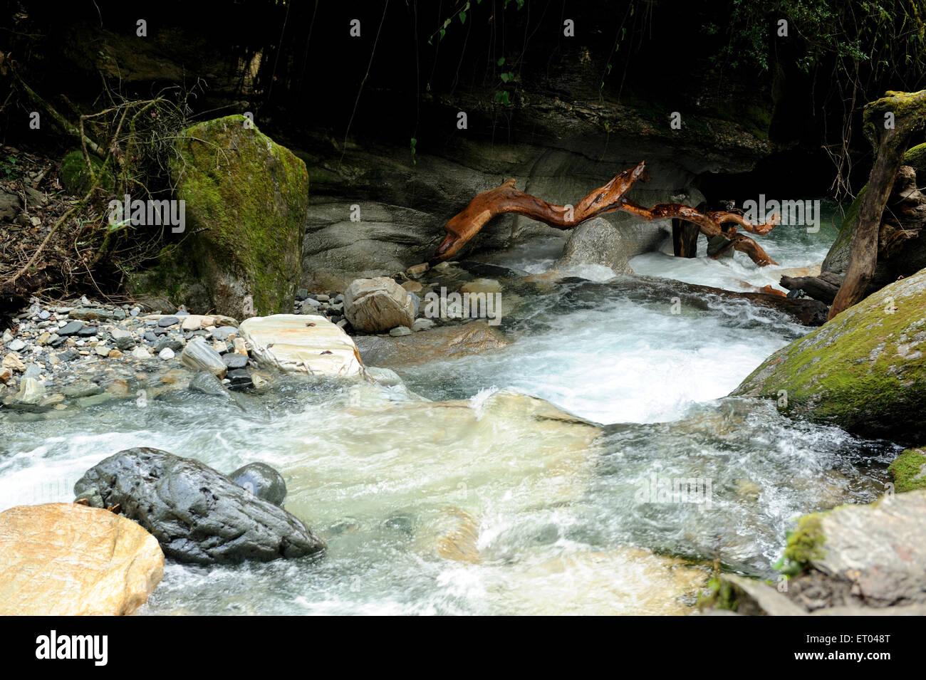 Stream with trunk ; Ghoripani ; Nepal - Stock Image