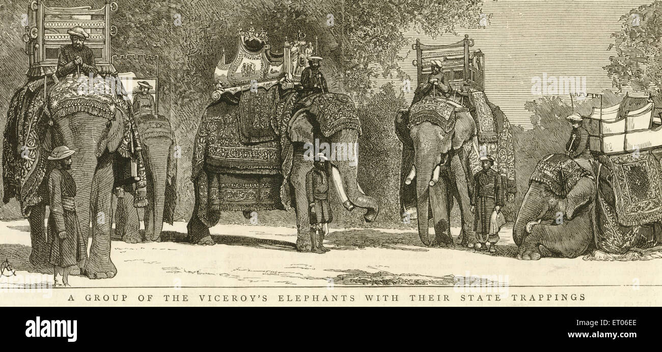 4476845ba79769 A group of the Viceroy's elephants with there state trappings ; India -  Stock Image