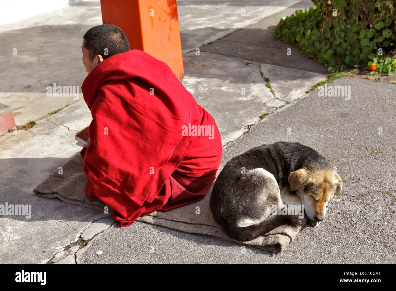 Dog sleep behind monk reading scriptures ; Happy valley ; Mussoorie ; Dehradun ; Uttaranchal Uttarakhand ; India - Stock Image
