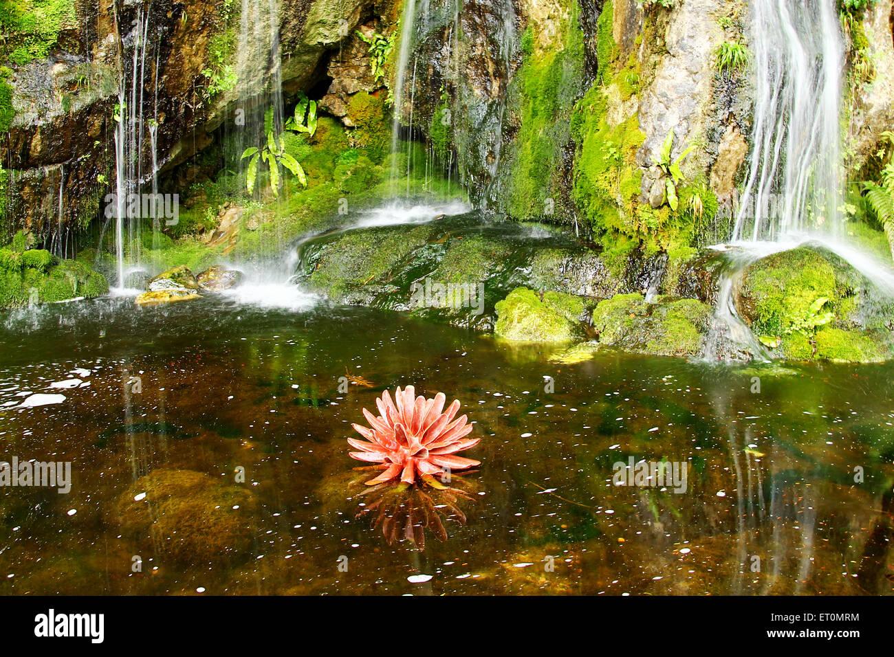 Magical Garden Waterfalls   Stock Image