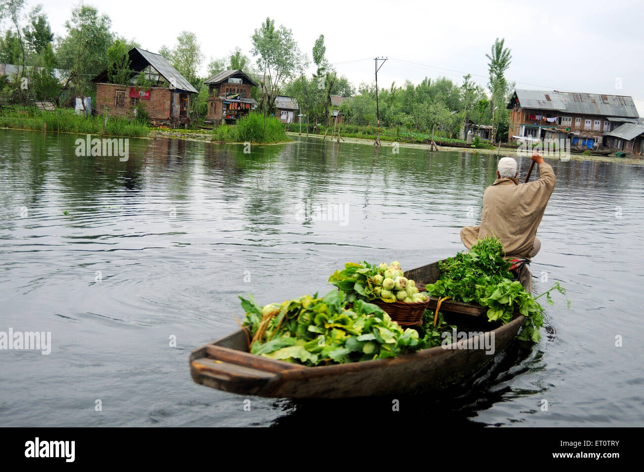 Kashmiri vegetables seller on canoe in dal lake ; Srinagar ; Jammu and Kashmir ; India - Stock Image