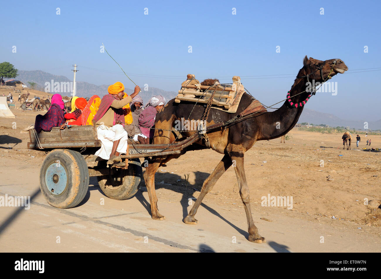 Family travelling on camel cart at pushkar fair ; Rajasthan ; India MR#786 - Stock Image
