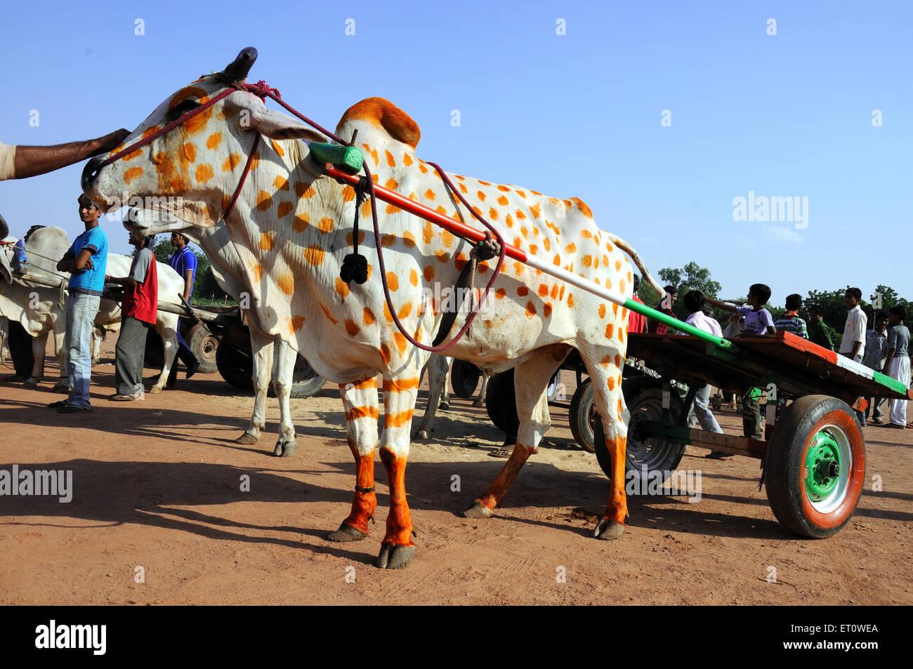 Ox carts at marwar festivals ; Jodhpur ; Rajasthan ; India - Stock Image