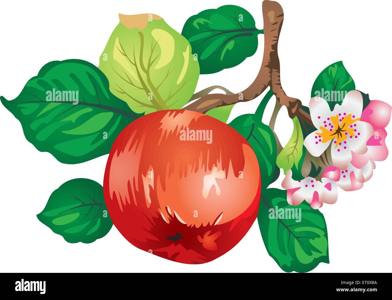apple-tree branch vector - Stock Vector