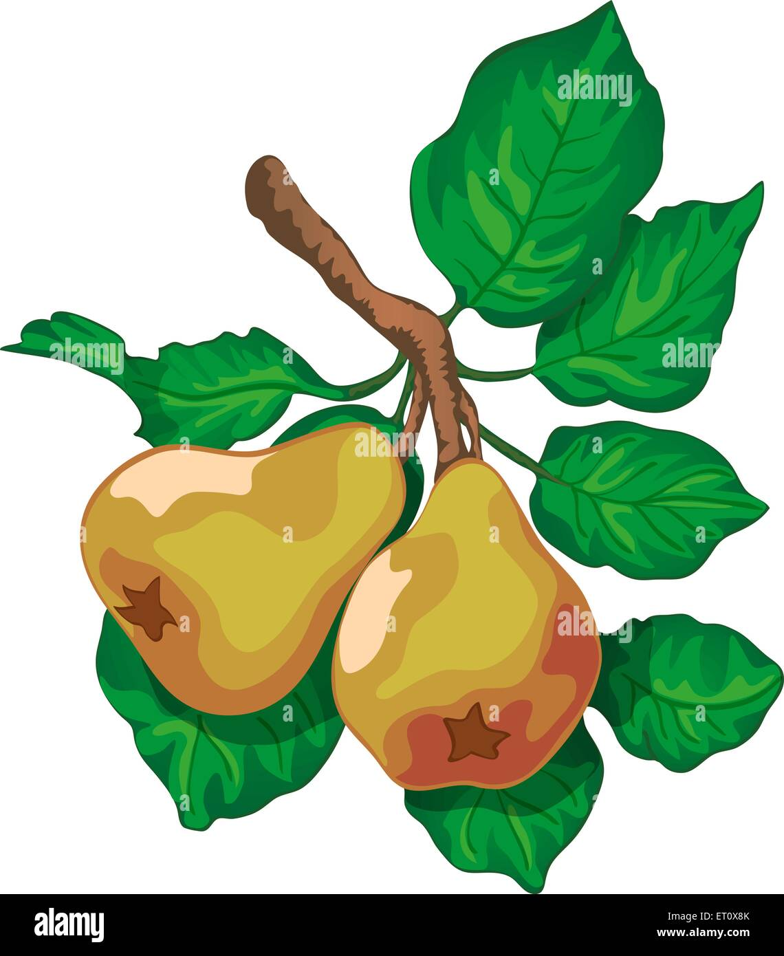 branch of a ripe pears with green leaves - Stock Vector