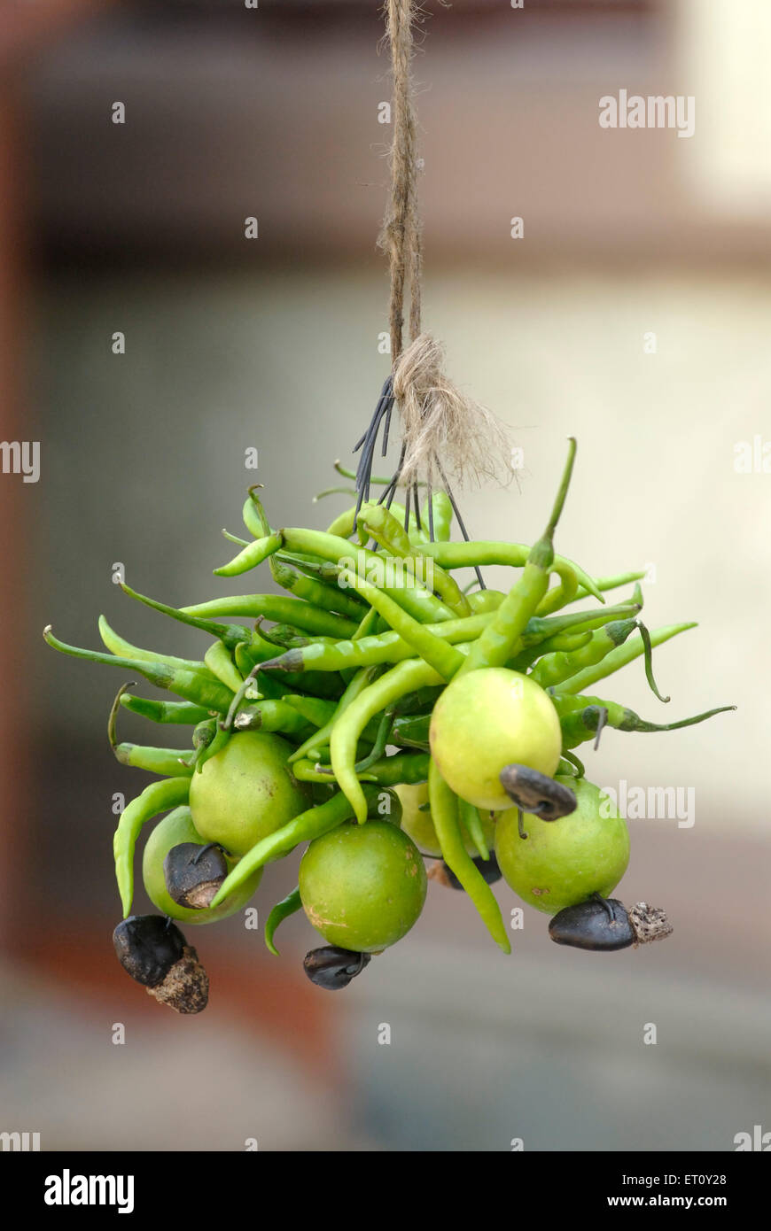 Green chillies ; lemon and bibba ; Semecarpus anacardium thread in metal wire for sell at foothill of Parvati hill - Stock Image