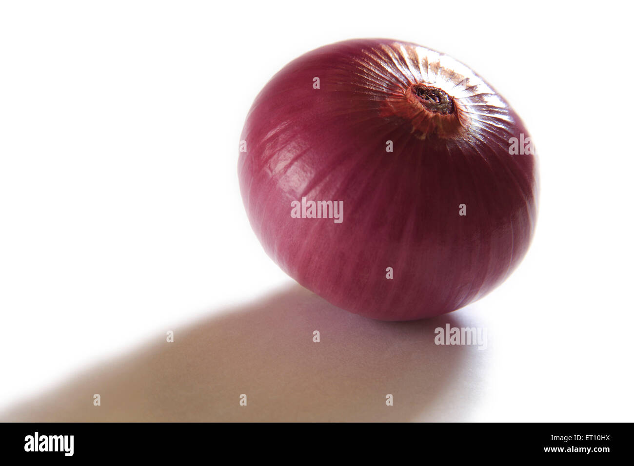 Spices ; kanda piyaz unpeel onion allium cepa on white background - Stock Image