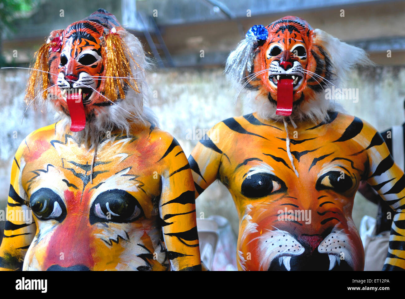 Pulikali or tiger play performers painted bodies like tigers during onam celebration ; Trivandrum ; Kerala ; India - Stock Image
