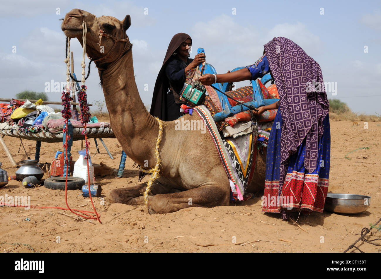 Gypsy tribal women carrying household thing on camel ; Kutch ; Gujarat ; India - Stock Image