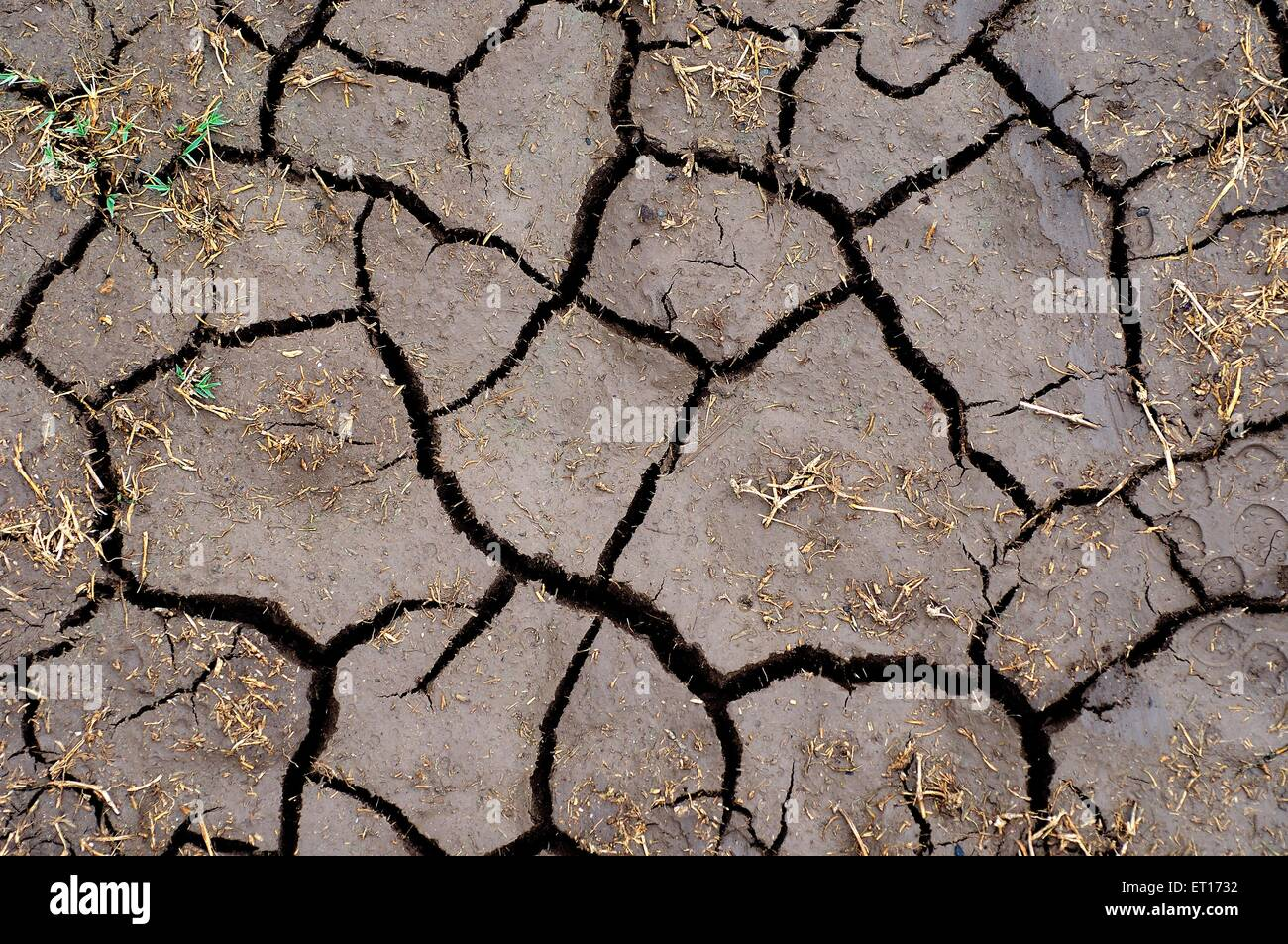 Drought ; dry earth - Stock Image