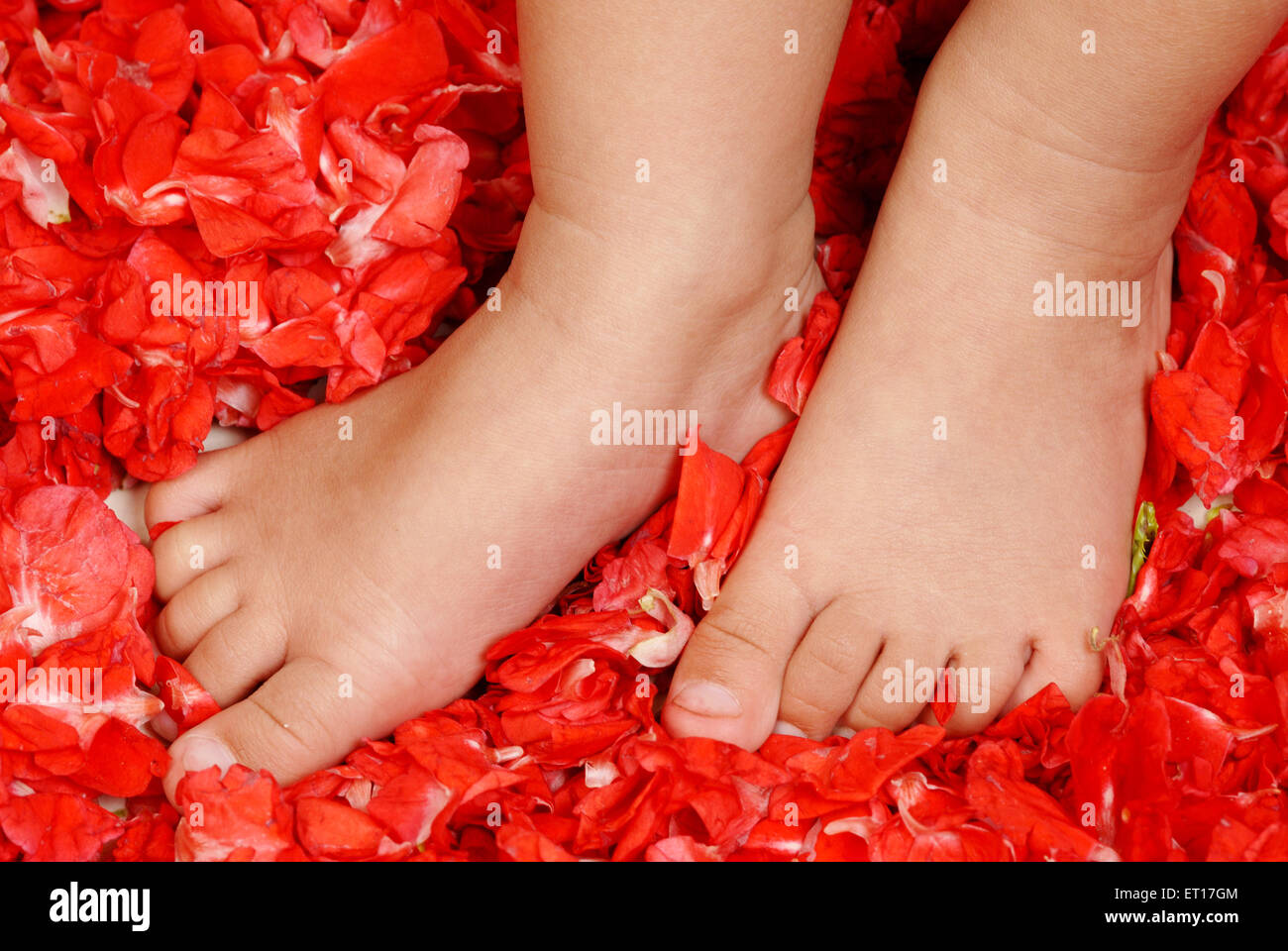 Baby feet standing on red rose flower petals MR#152 - Stock Image
