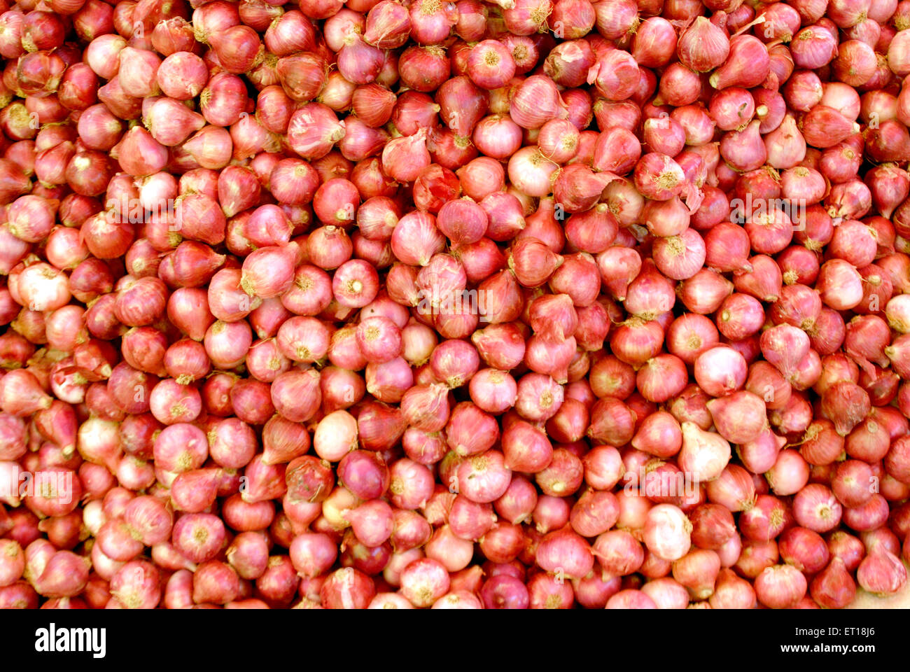 Spices ; onions November 2008 - Stock Image