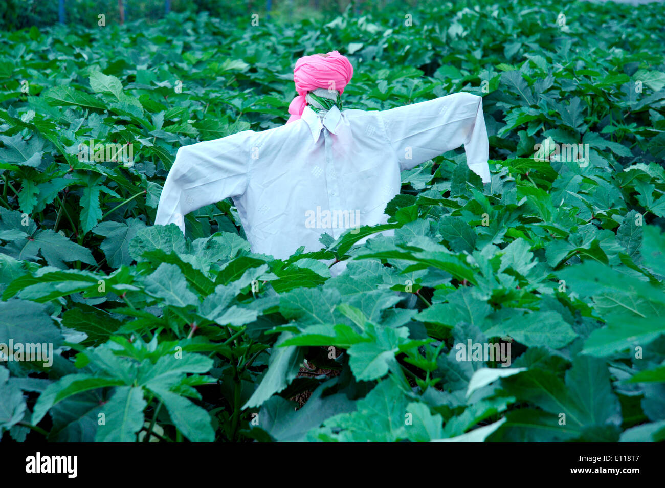 Statue of Scarecrow in the Field to Frighten Birds - Stock Image