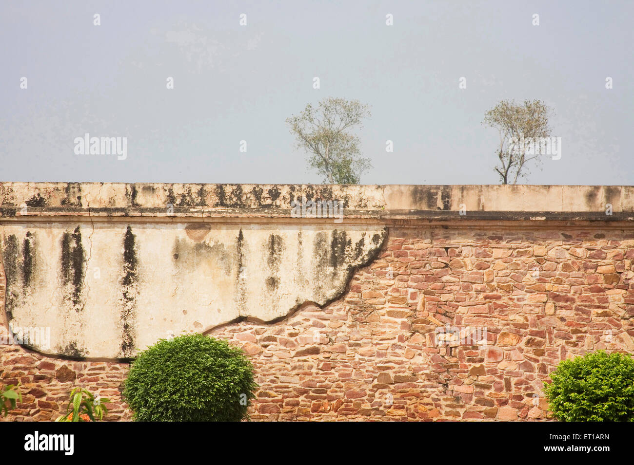 Old wall composition with two trees behind red stone Mughal architecture ; Fatehpur Sikiri ; Uttar Pradesh ; India - Stock Image