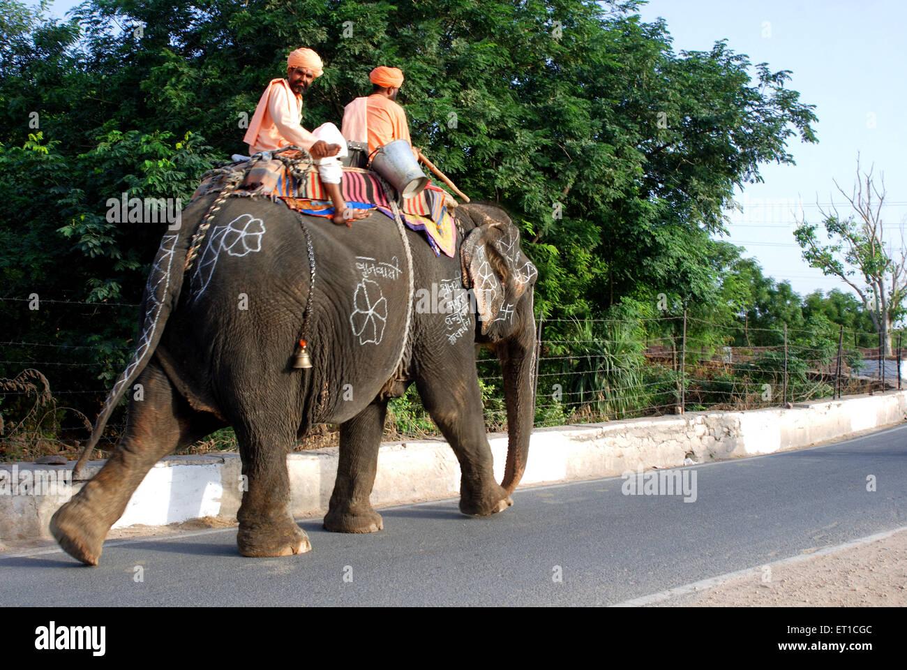 Sadhus sitting on elephant walking on road ; Jodhpur ; Rajasthan ; India - Stock Image