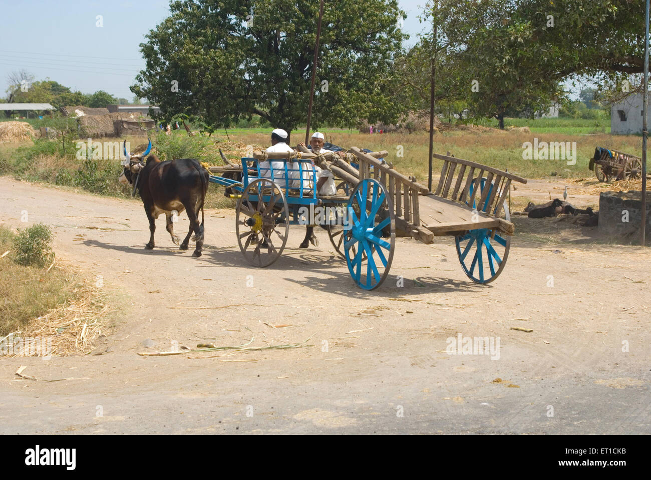 Bullock carts on road of shingnapur ; Nasik ; Maharashtra ; India MR#704 - Stock Image
