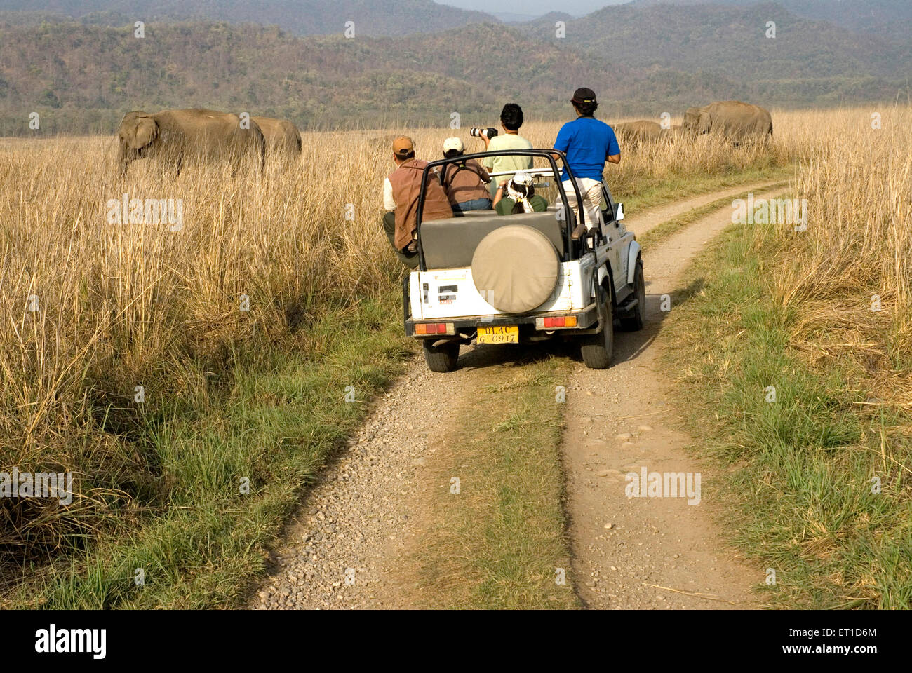 Tourists watching wild elephants from open jeep in Jim Corbett forest Garhwal Uttaranchal Uttarakhand India - Stock Image