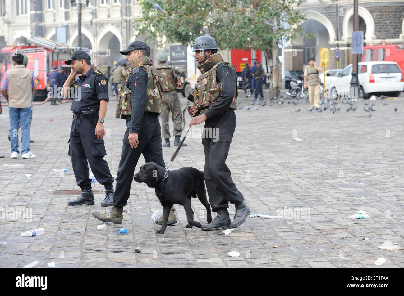National Security Guard NSG commandos Sniffer dog Taj Mahal hotel ; Terrorist attack Deccan 26 November 2008 in - Stock Image