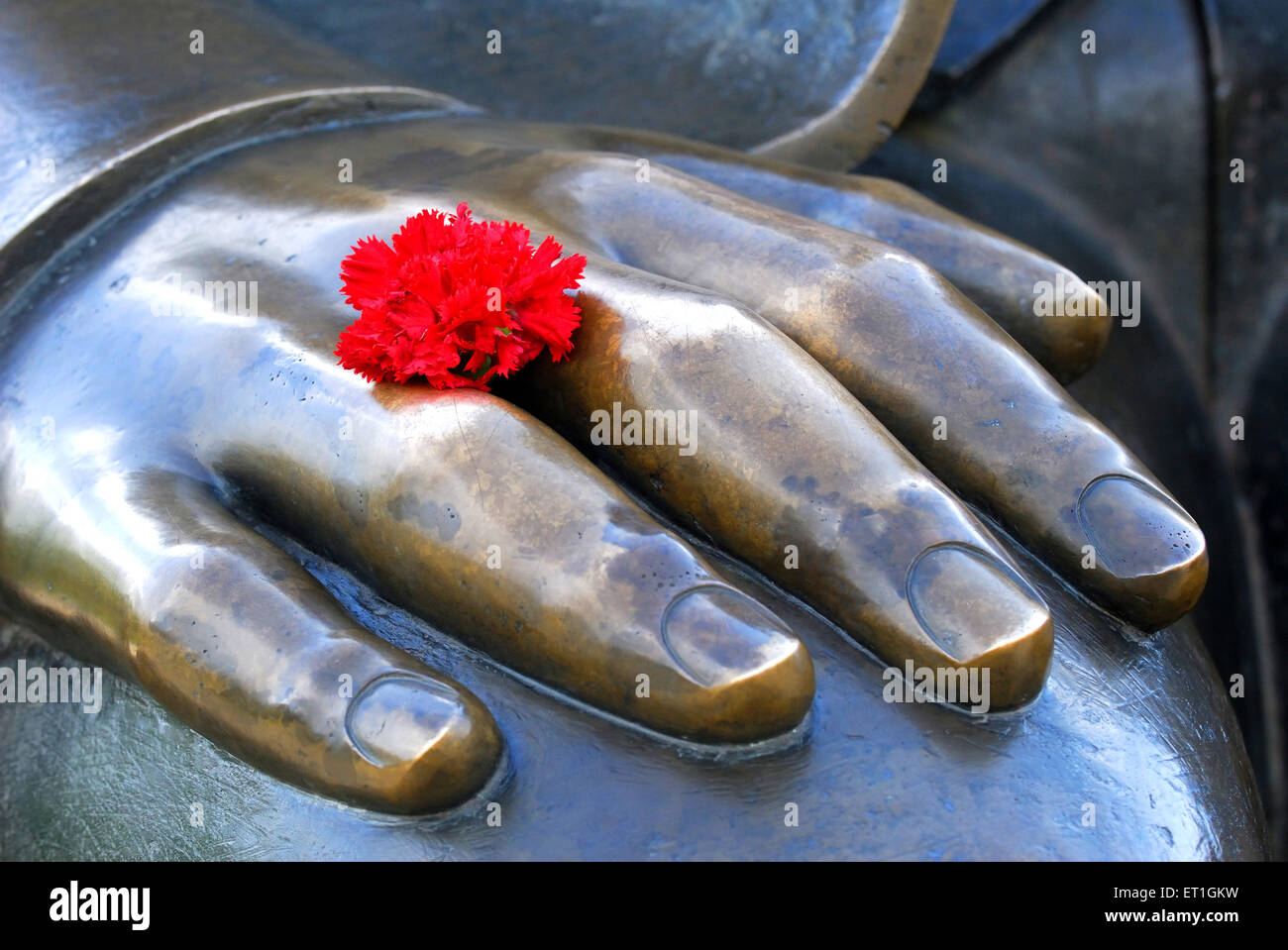 Token of respect with red carnation ; Germany - Stock Image