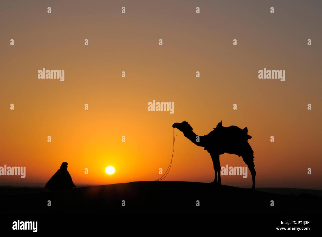 Glorious sunrise man with camel on sand dunes ; Jaisalmer ; Rajasthan ; India - Stock Image