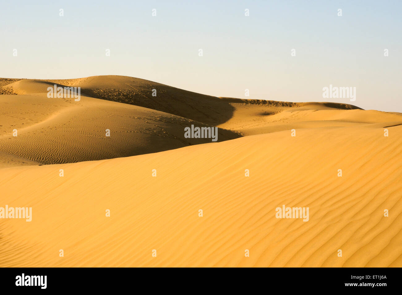 Ripple design on sand dunes due to wind with highlight and shadow play at Sam ; Jaisalmer ; Rajasthan ; India - Stock Image