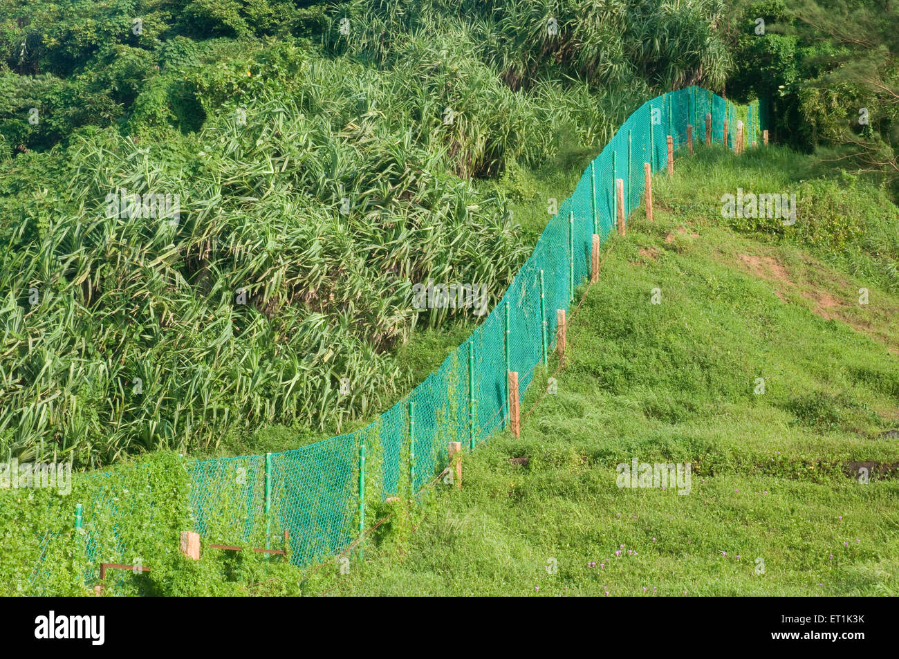 Foliage and green mesh divider Anjuna Beach Goa Maharashtra India Asia Sept 2010 - Stock Image