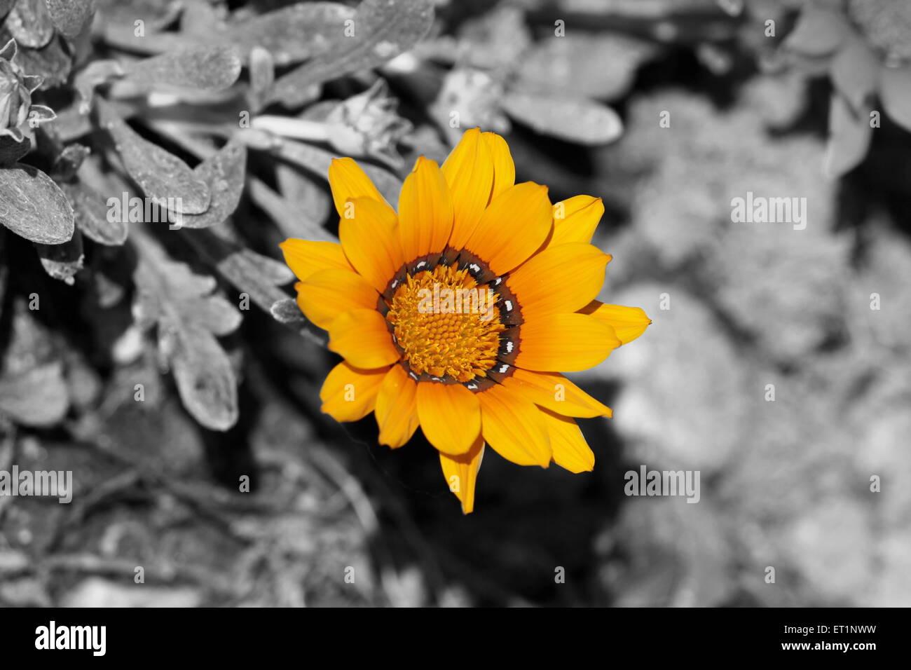 Fiori Gialli Yellow Flowers.Giallo Yellow Stock Photos Giallo Yellow Stock Images Alamy