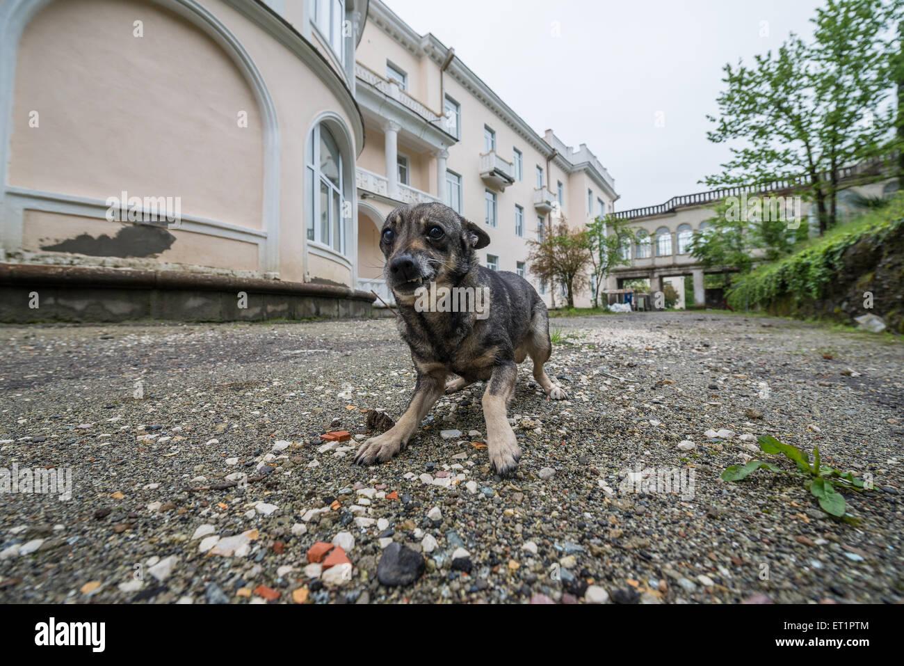 Small Dog In Tskaltubo Spa Resort Hotel In Tskaltubo City Or Stock