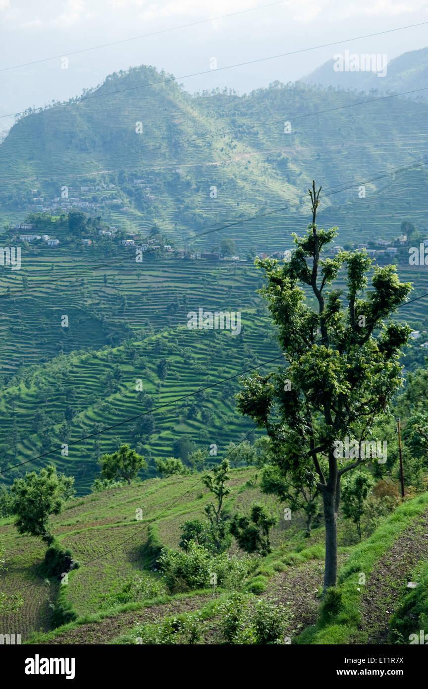 Landscape of himalayan valley uttarakhand India Asia - Stock Image