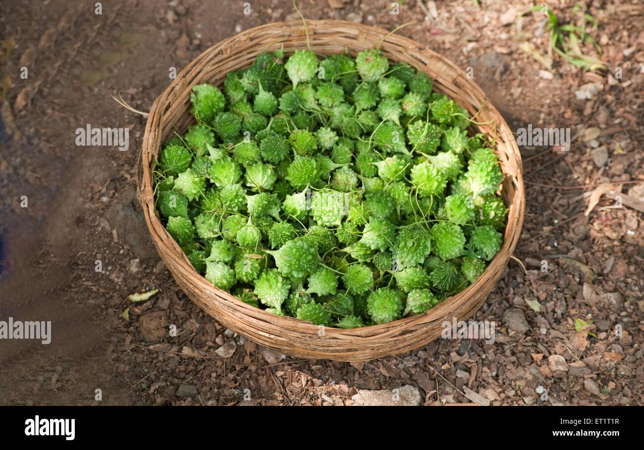 Vegetable karela in Gujarat India Asia - Stock Image