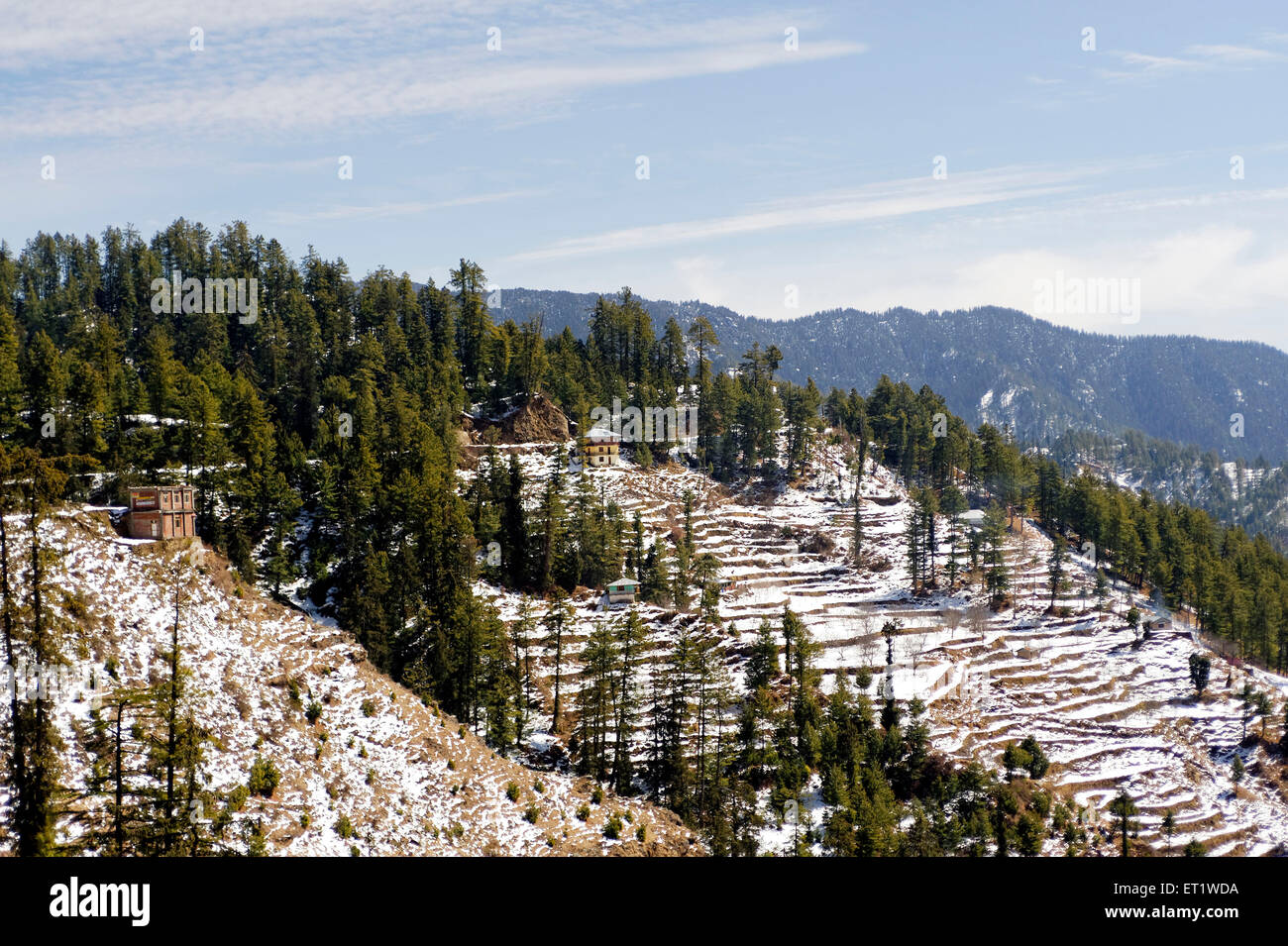 Snow on Mountain in Shimla at Himachal Pradesh India Asia - Stock Image