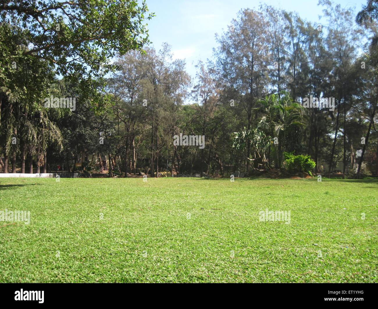Green grass lawn ; India - Stock Image