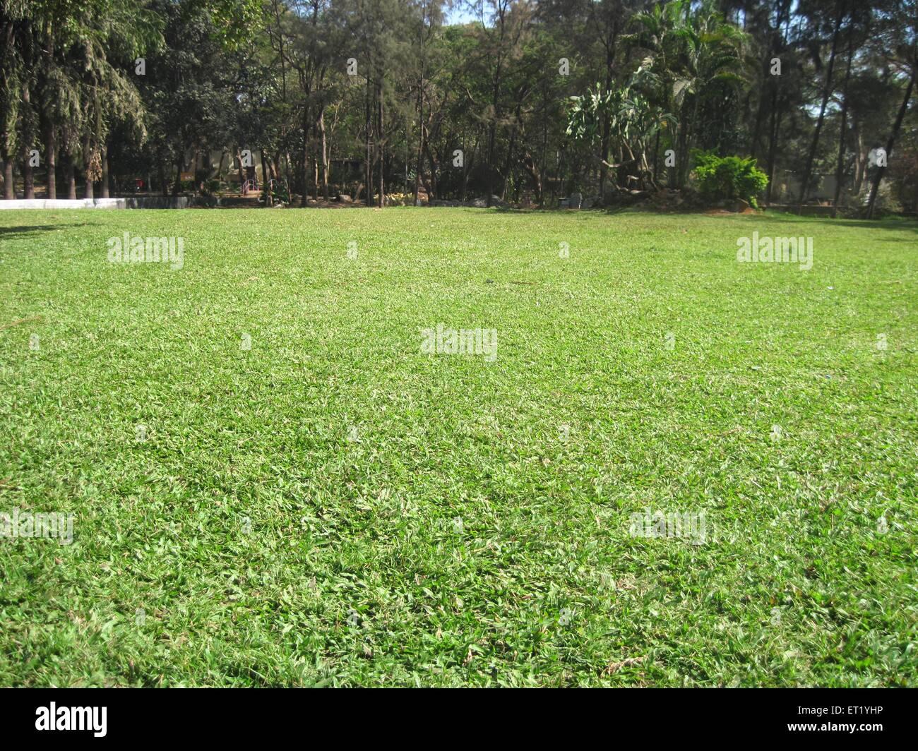 Green grass lawn Stock Photo