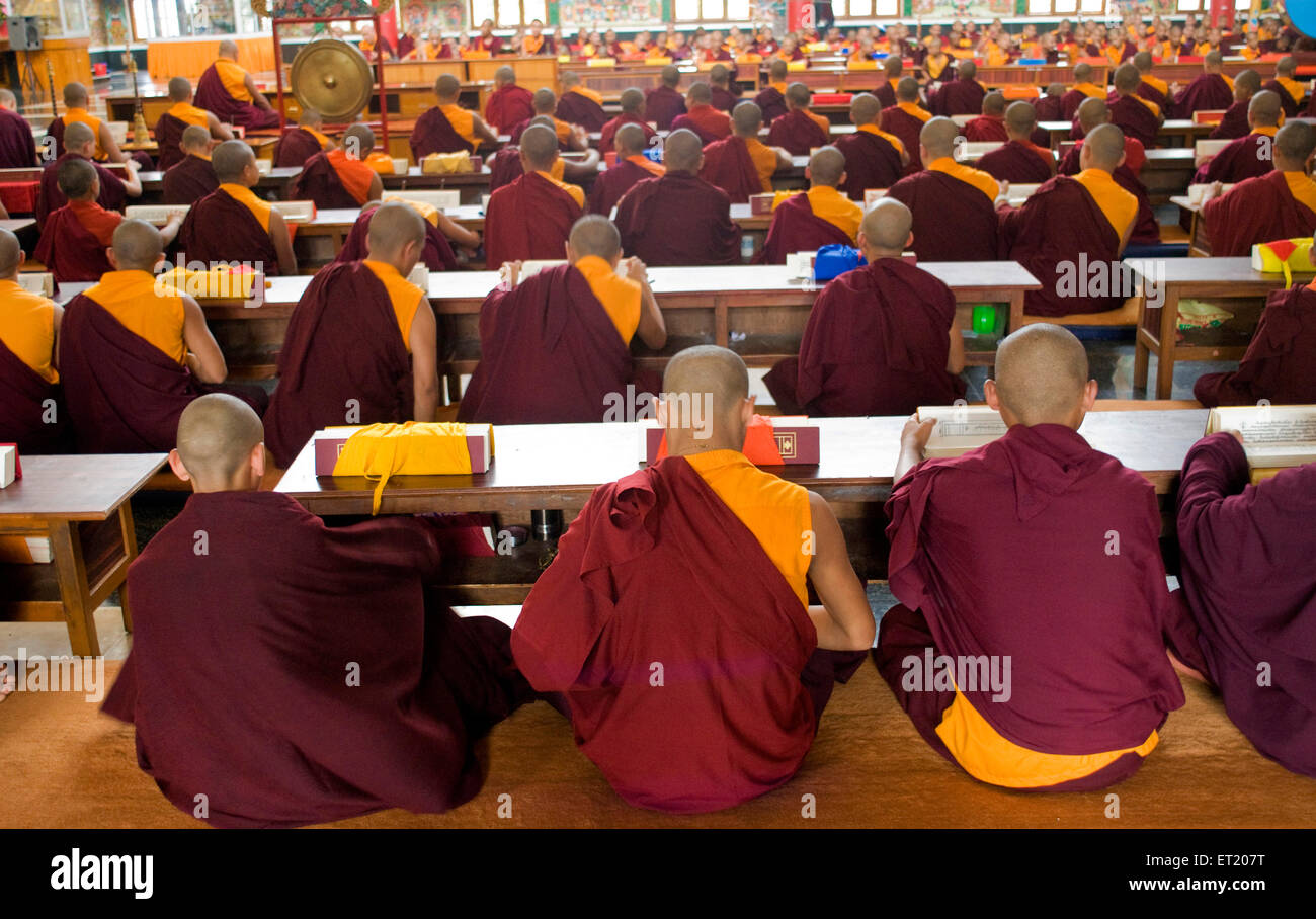 Monks studying scriptures in Namdroling monastery Palyul Nyingmapa Buddhist centre ; Byalakuppe ; Mysore ; Karnataka - Stock Image