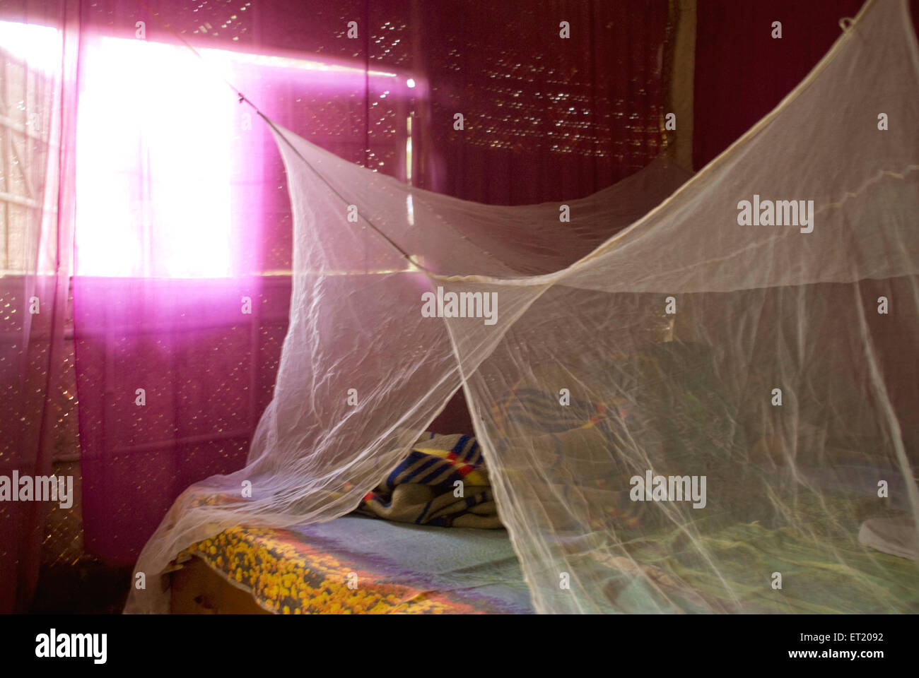 Interior of shack with pink curtains and white mosquito net covering bed ; Goa ; India - Stock Image