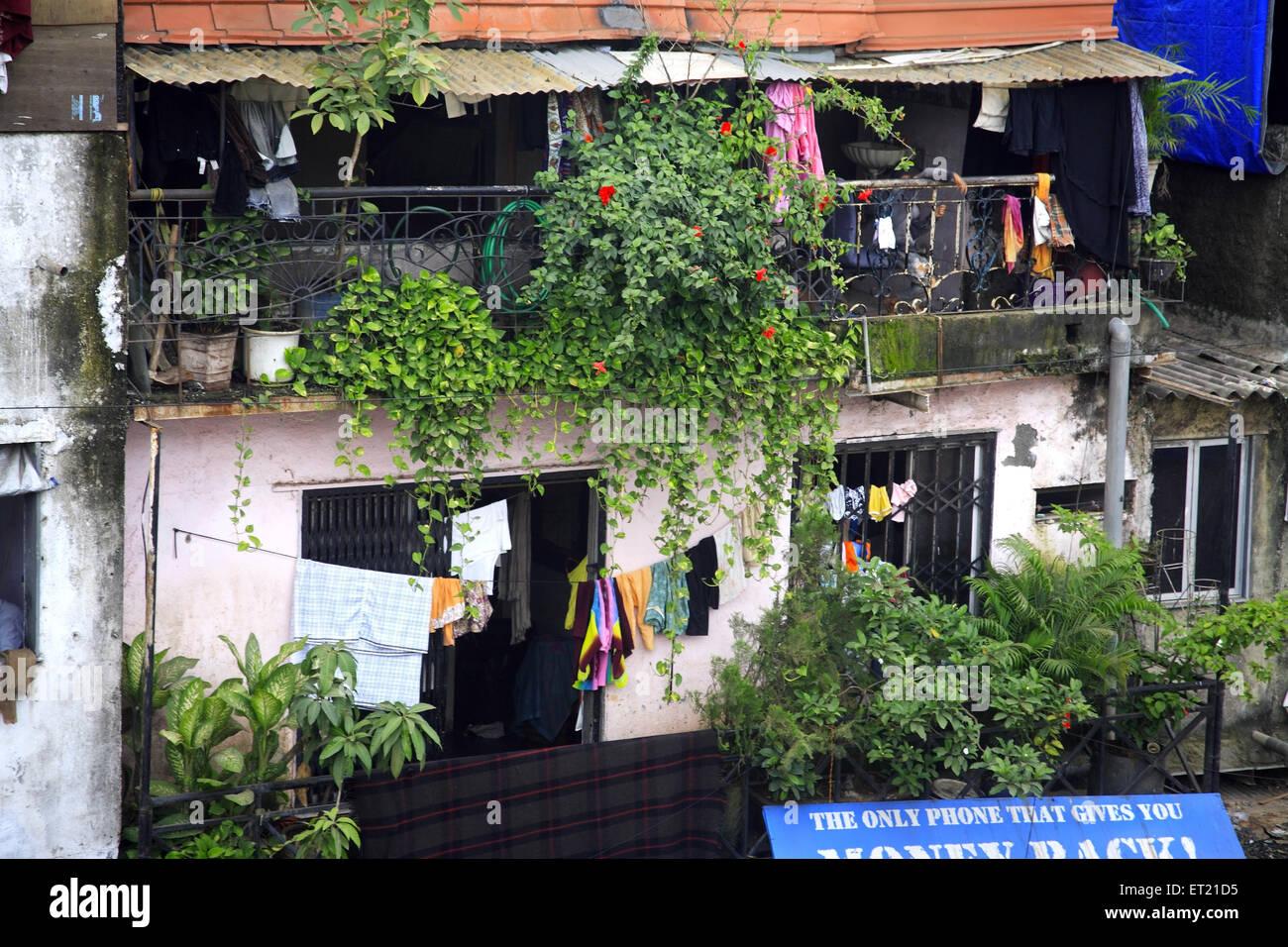 Plants and drying cloth in slum Behram Naupada ; Anant Kanekar Marg ; Bandra ; Bombay Mumbai ; Maharashtra Stock Photo