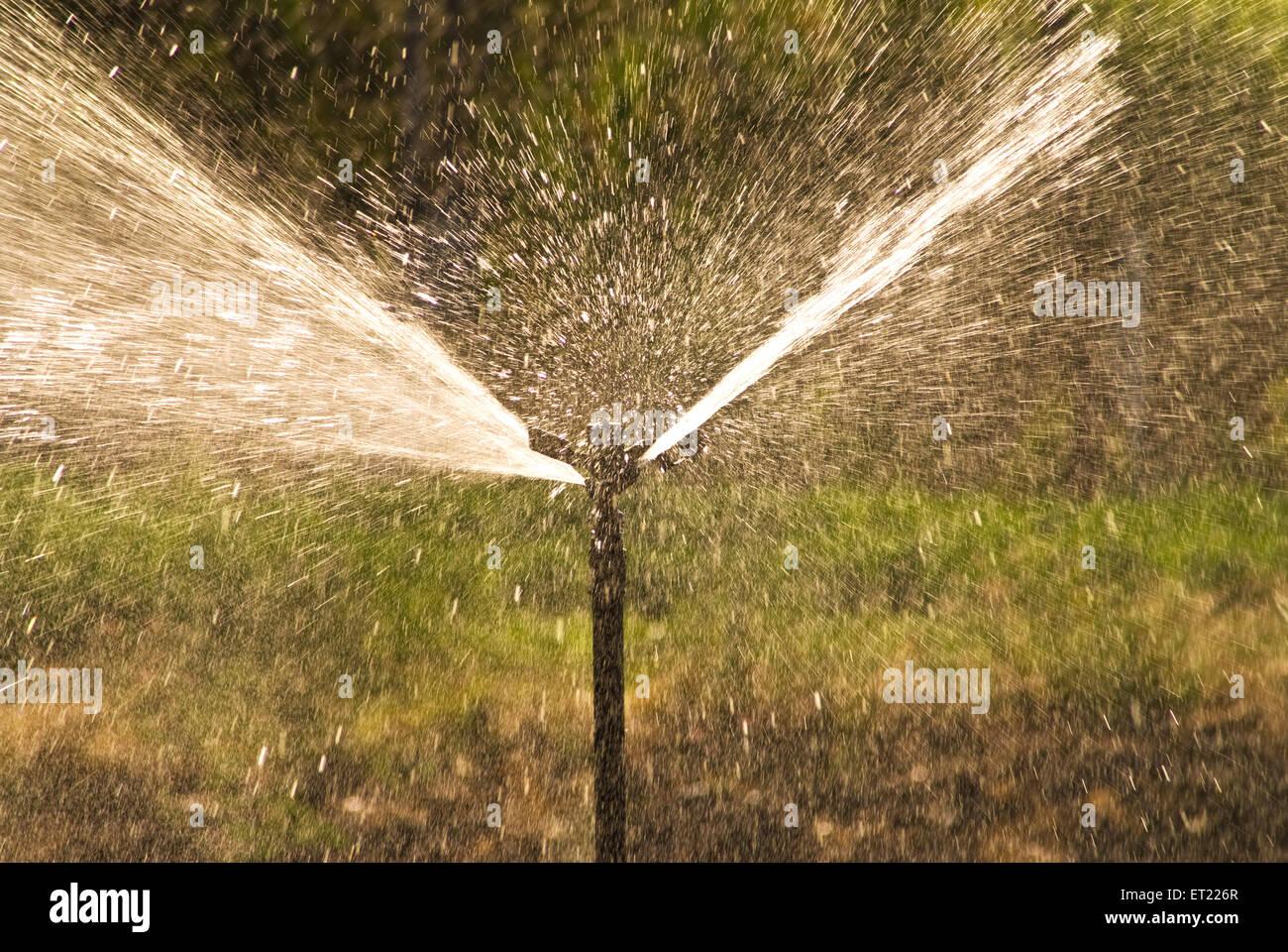 Sprinkler irrigation ; Padhegaon ; Ahmadnagar ; Maharashtra ; India February 2009 - Stock Image