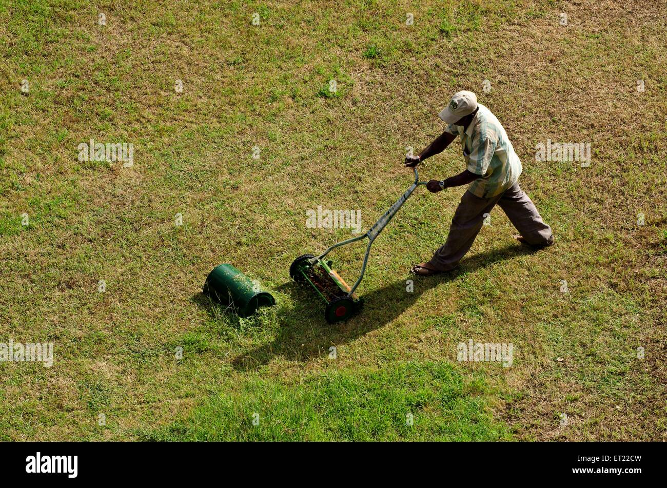 gardner moving lawn grass with mower machine Pune Maharashtra India Asia - Stock Image