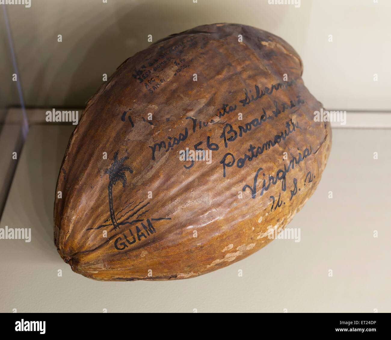 Coconut sent from Guam to Virginia by US Postal Service - USA - Stock Image