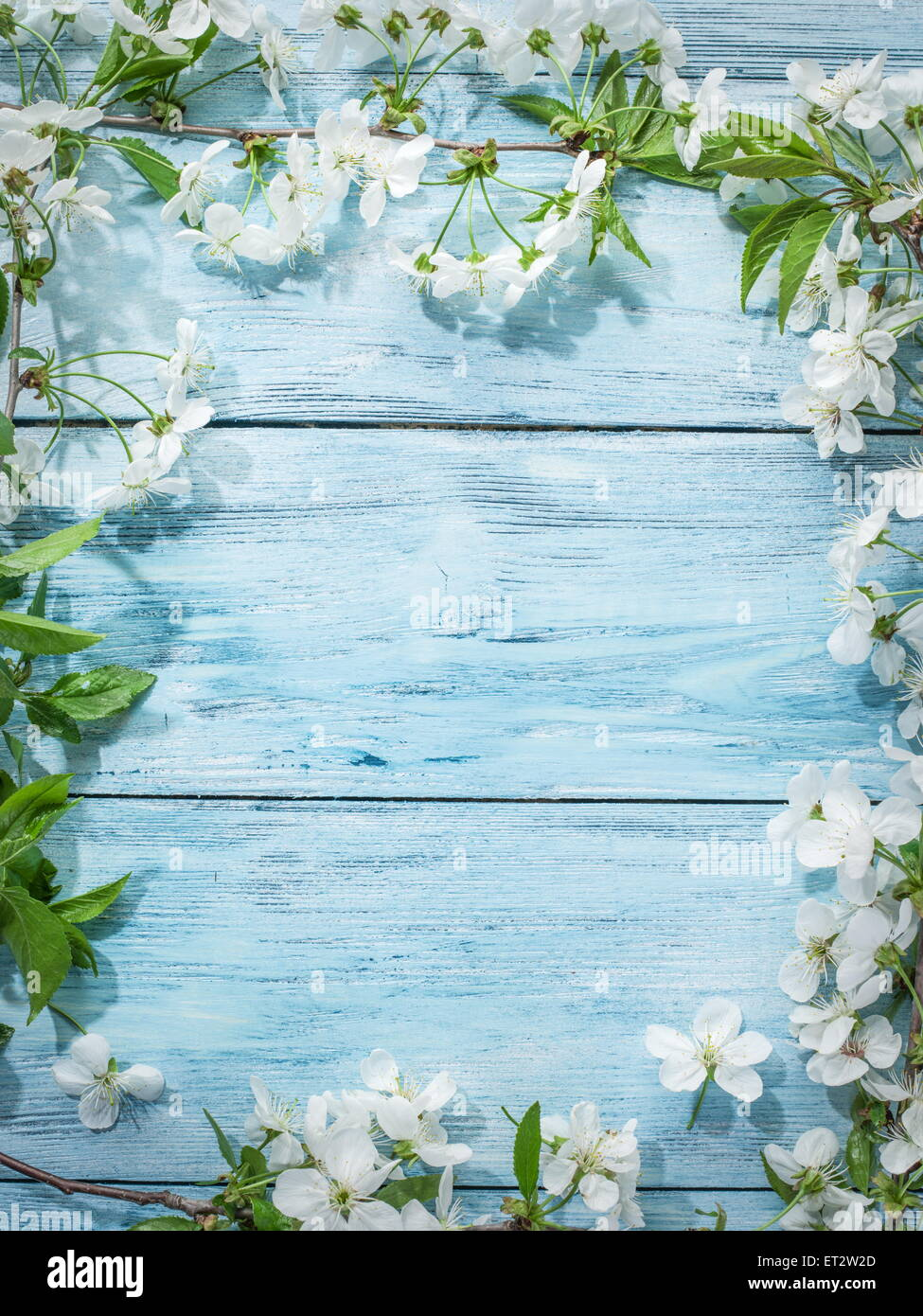 Blooming cherry twig over old wooden table. - Stock Image